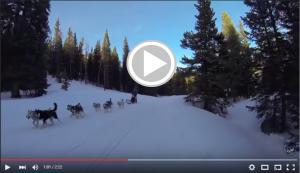 Dog Sledding Video